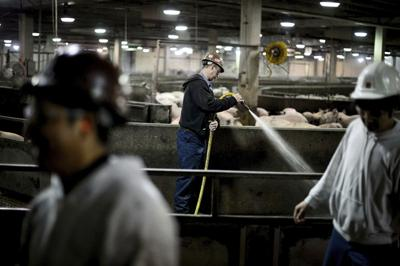 U.S. meat workers are quitting as virus-ridden plants reopen