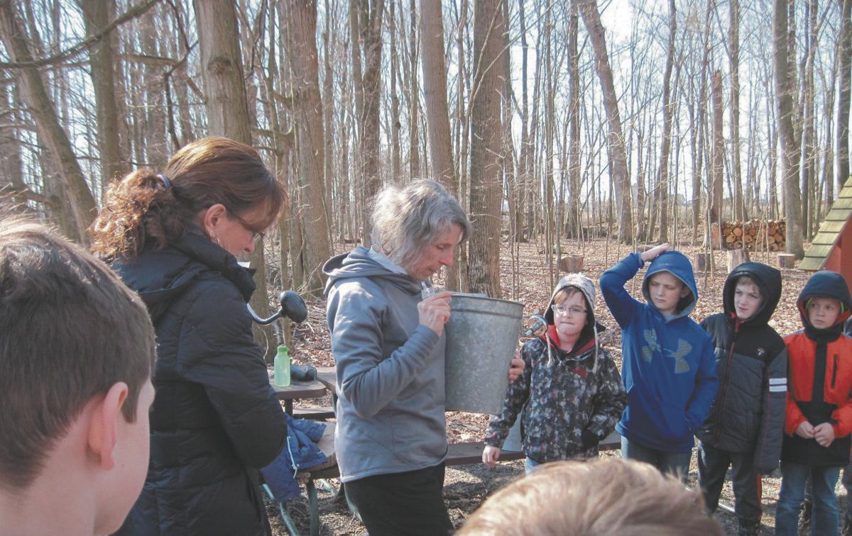 Deb Steransky Prepares For Warrior Run Students To Place Buckets Collecting Sap From Sugar Maple Trees At The Montour Preserve