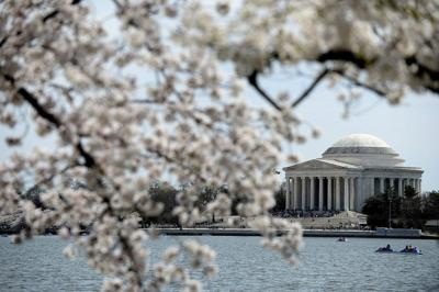 Delight in Washington's annual Cherry Blossom Festival from home
