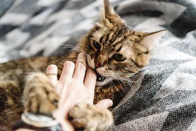 catbite.jpg