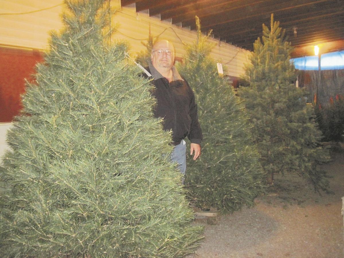 trees - Black Friday Christmas Tree Sale