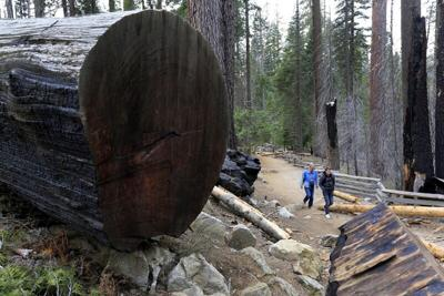 Yosemite is reopening, but you'll need a reservation even for a day visit