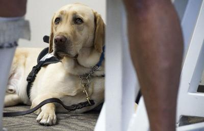 Most support animals on flights about to be grounded