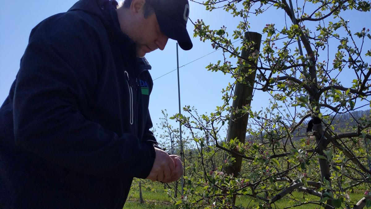 Frost threat sparks countermeasures to protect fruit crops at Dries Orchards