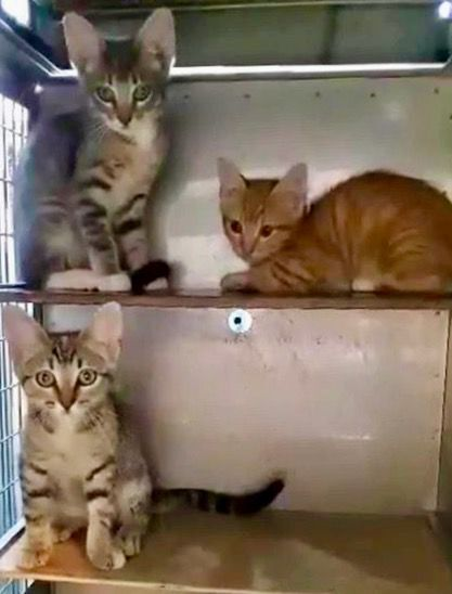 Pound cat, six kittens need loving homes this week