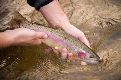 MDC stocks trout in southeast Missouri lakes as winter trout season approaches