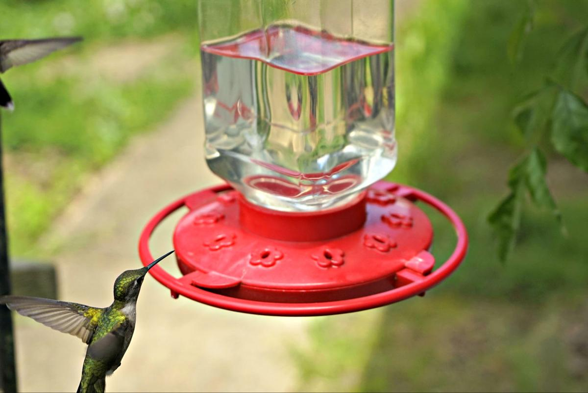 It S Time To Put Out Your Hummingbird Feeders Outdoors