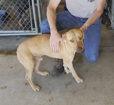 Pomeranian, pit bull and more available at Desloge Pound ...