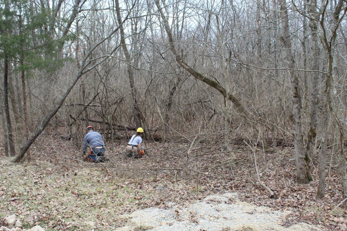 Park removing bush honeysuckle