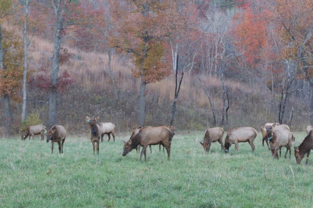Elk and leaves
