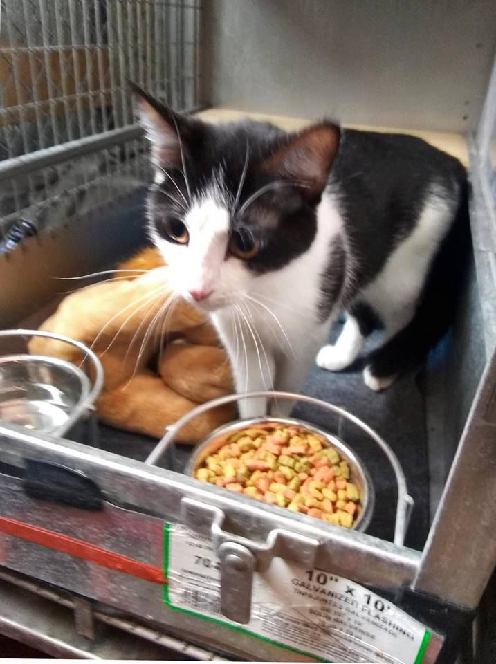 Six pound cats and four kittens need forever homes