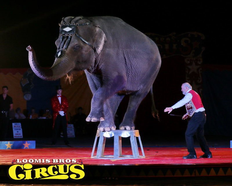 Circus coming to Bonne Terre