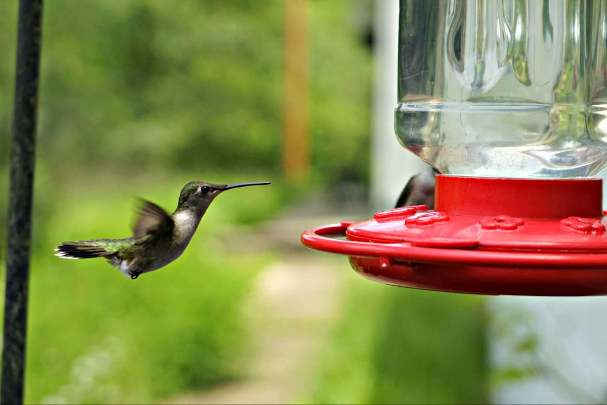 It S Time To Put Out Your Hummingbird Feeders