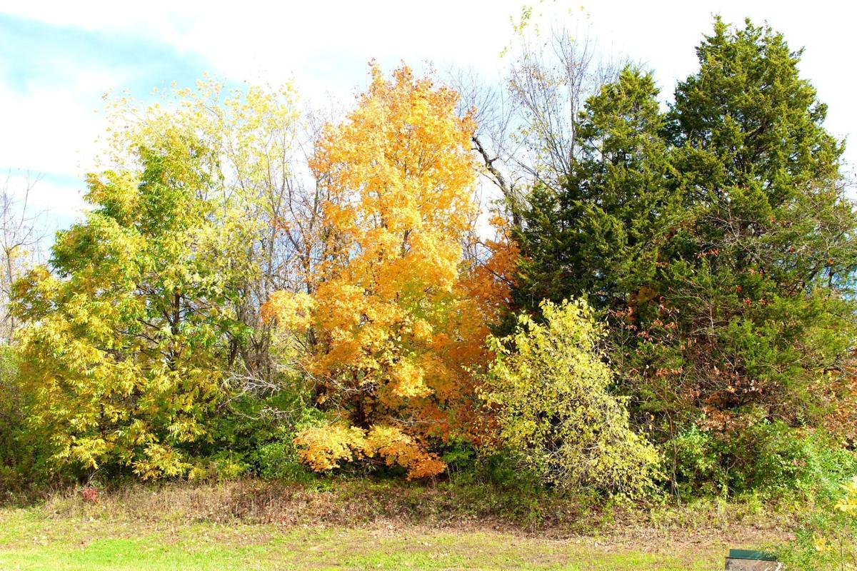 Enjoy a Missouri autumn with MDC's fall color forecast