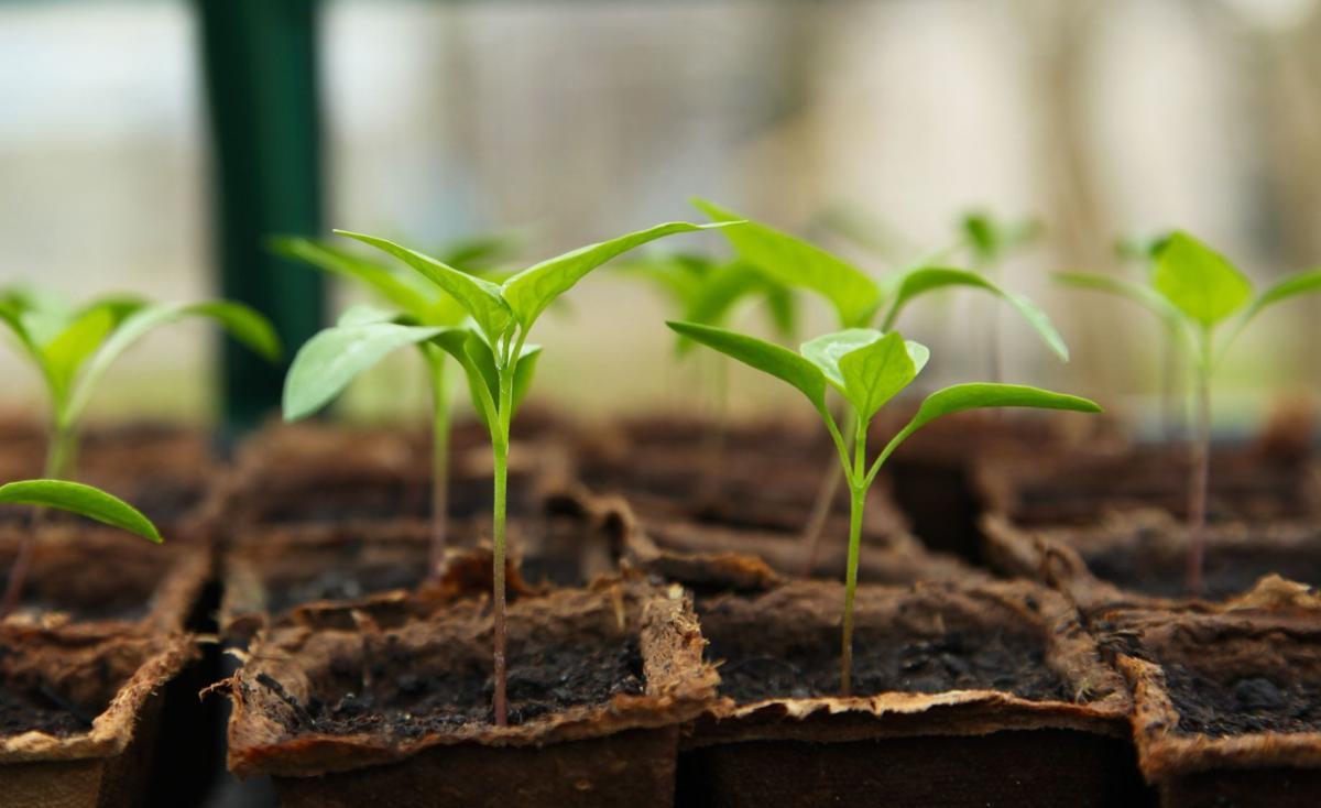 Beginning Gardener online series returns for 2021