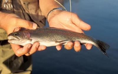 Catch-and-keep trout fishing starts March 1 at trout parks