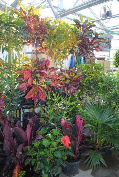 Dix Garden Center opens today | News | dailyjournalonline.com