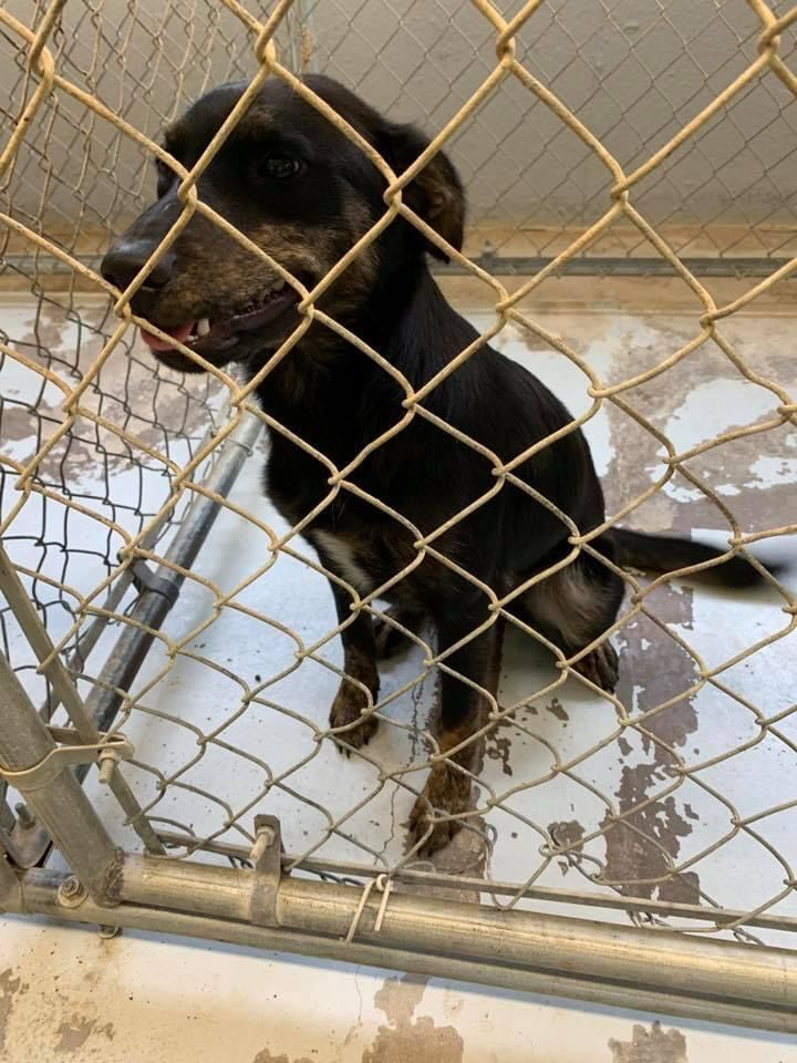 Two dogs, six cats urgently need to find homes