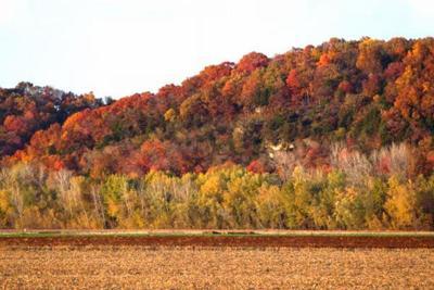Fall Colors Trees