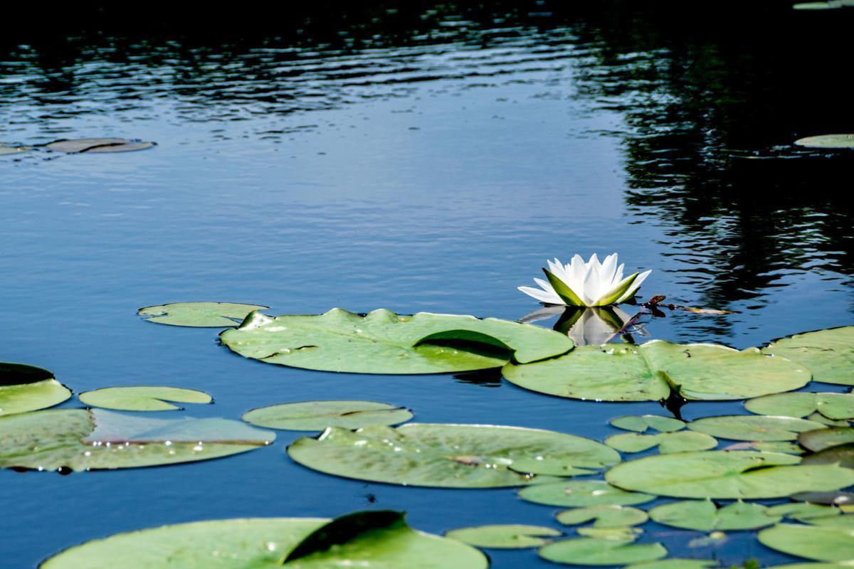 Crane Lake-3.jpg