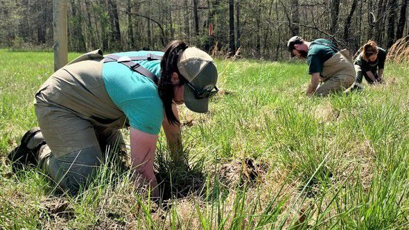 MDC collaborates with University of Illinois for ongoing crayfish study