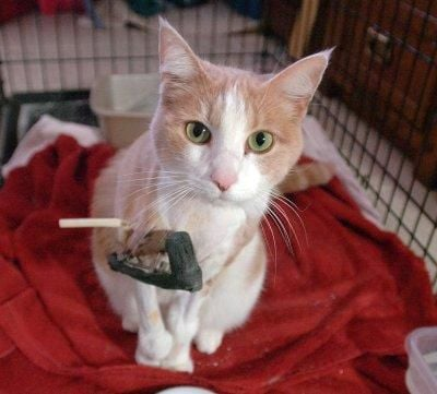Police say 2 cats shot with pellets