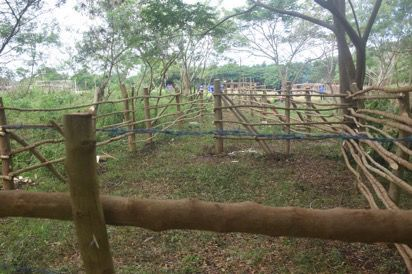 Shepherds Mini Agriculture Show: Emae Island Ready to Host Farmers from Shepherd Islands