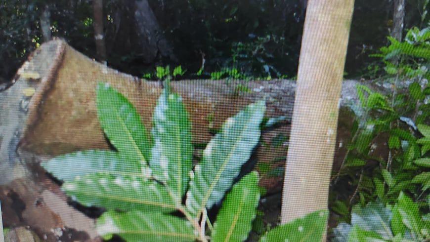 COI reveals Illegal Logging in Batbang, Aore, Matevulu, VATHE