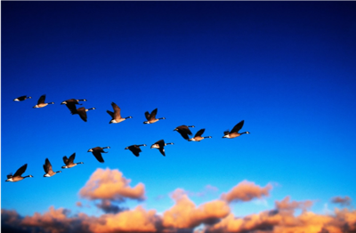 The Flying Geese Principle in Foreign Direct Investment: Invaluable Lessons for us