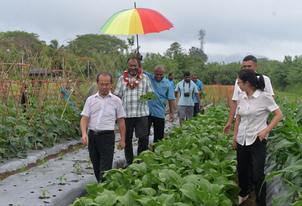 Vegetable Cultivation Technology Training Showcases Field Work