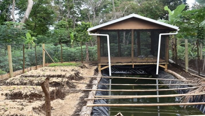 Integrated backyard farming to maintain food security and improve livelihood