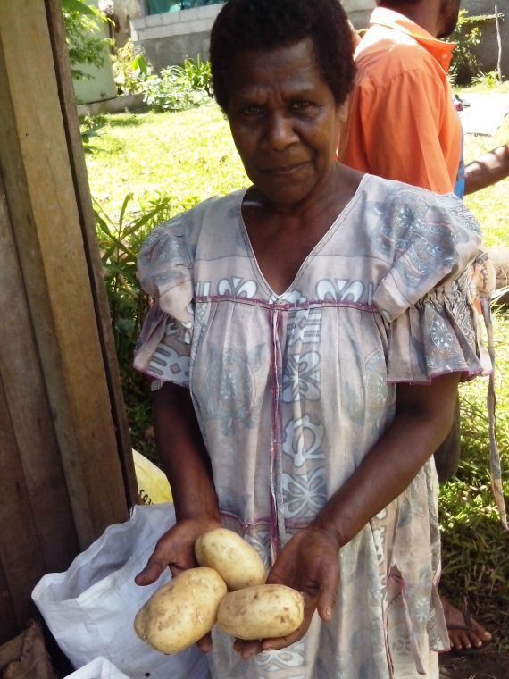 Potatoes on Tanna severly disturbed by dry weather