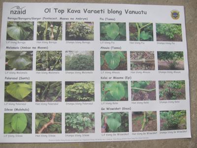 Kava - Vanuatu safe varieties