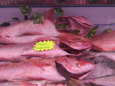 新建的鱼市场在维拉港开业