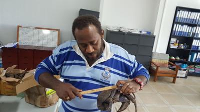 暂时禁止捕捞椰子蟹