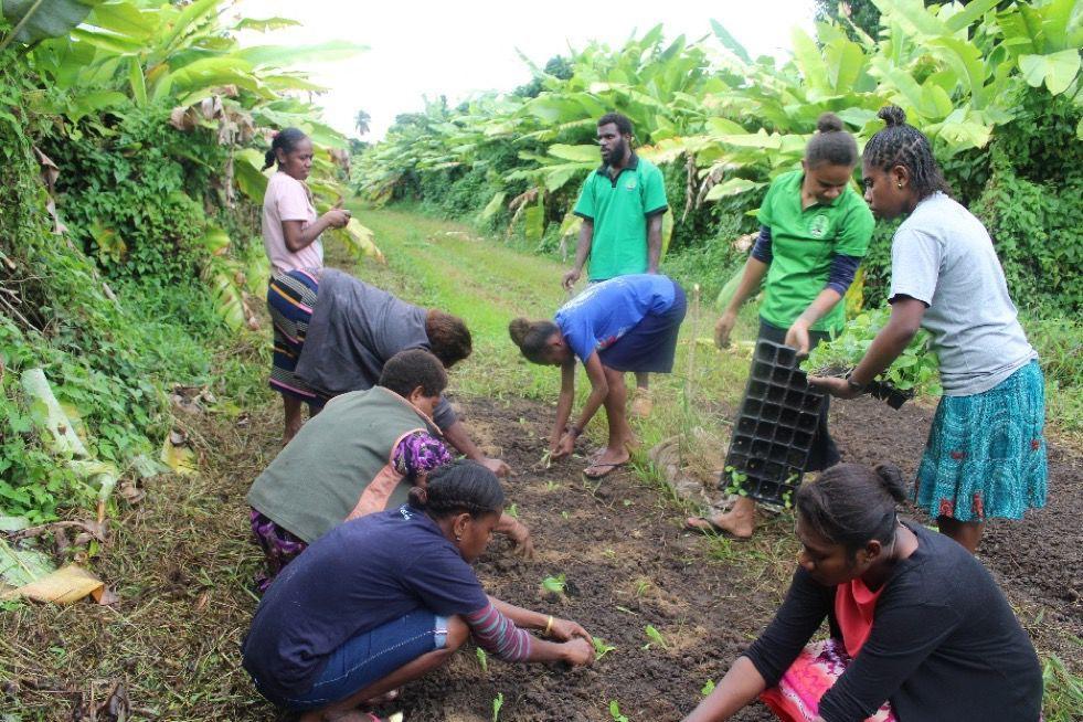 Pentecost youths plant vegetables