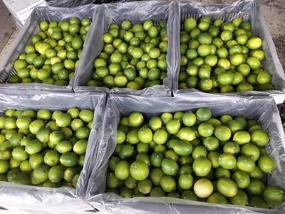 TAHITIAN LIME EXPORT TO NZ TO RESUME