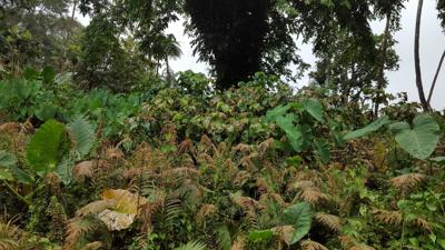 Acid Rain on East and West Ambae
