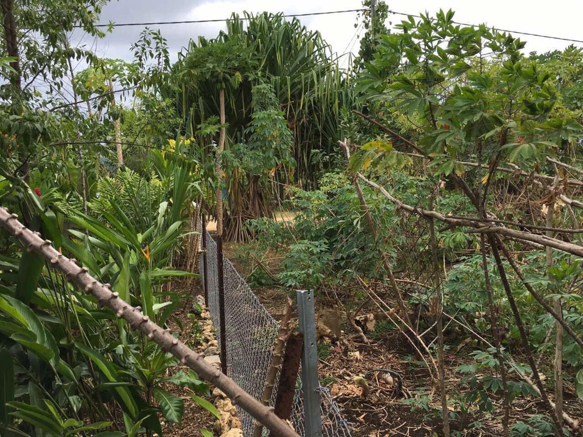 Backyard Gardening supports Food Security | News | dailypost.vu