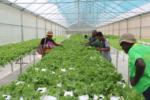 Field Visits for Vegetable Cultivation Technology Training Participants