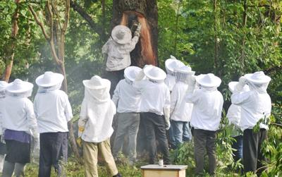 Vanuatu Agriculture College and ADRA equipping local farmers in beekeeping
