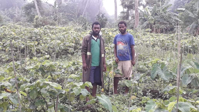 North Tanna Farmers to increase Noble Kava Production