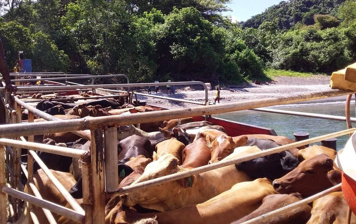 124 cattle offloaded for over 30 farmers on Epi