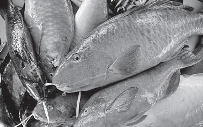 Call for basic hygienic requirement standards for fish industry