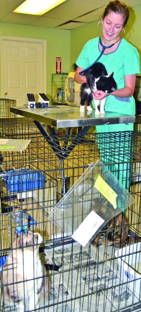 Rescued Pets Ready For Homes News Dailypostathenian Com