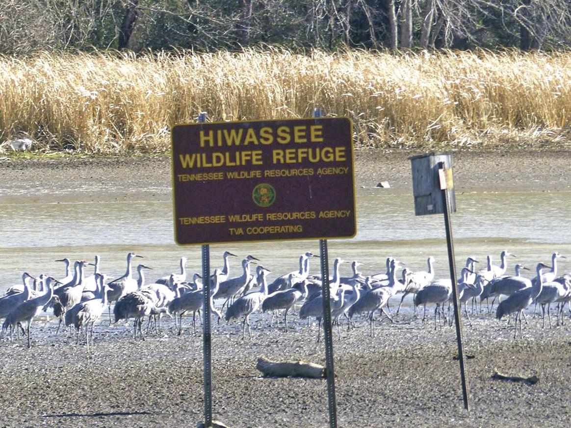 Image result for hiwassee river wildlife refuge