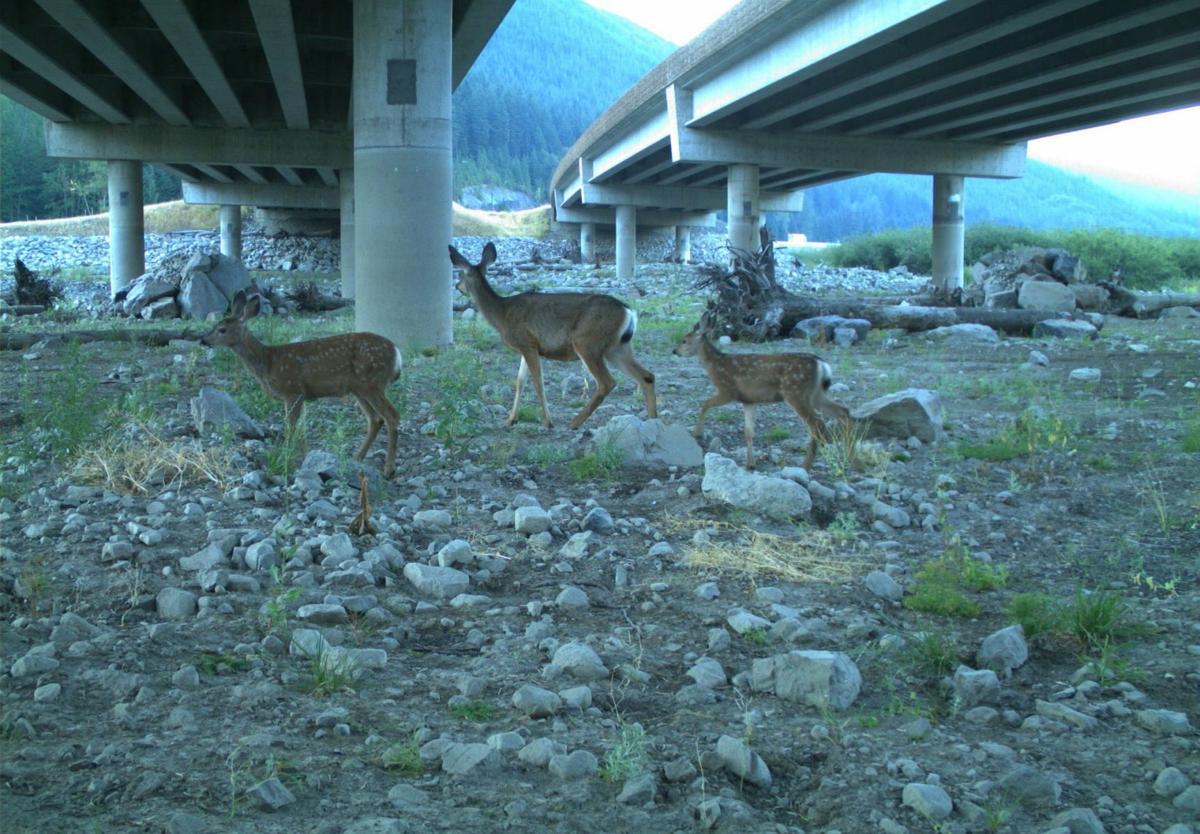 Wildlife Watch 4