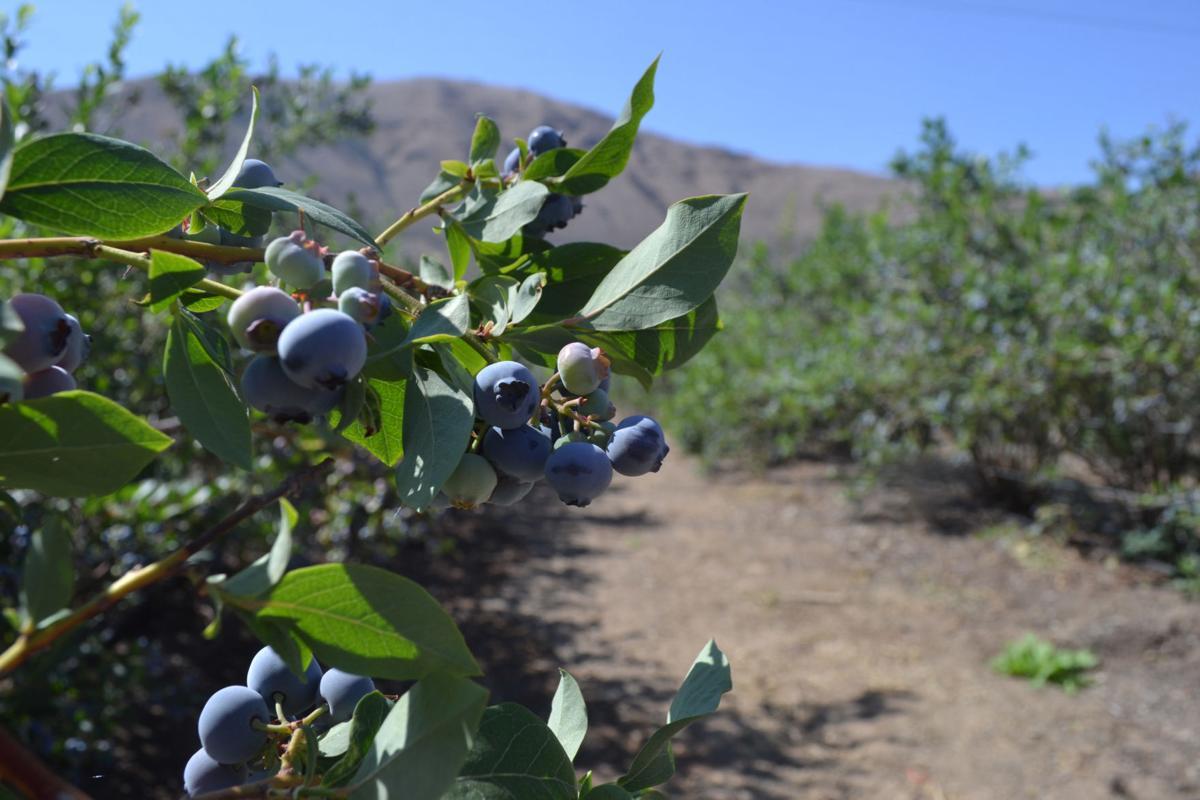 Ellensburg Berries
