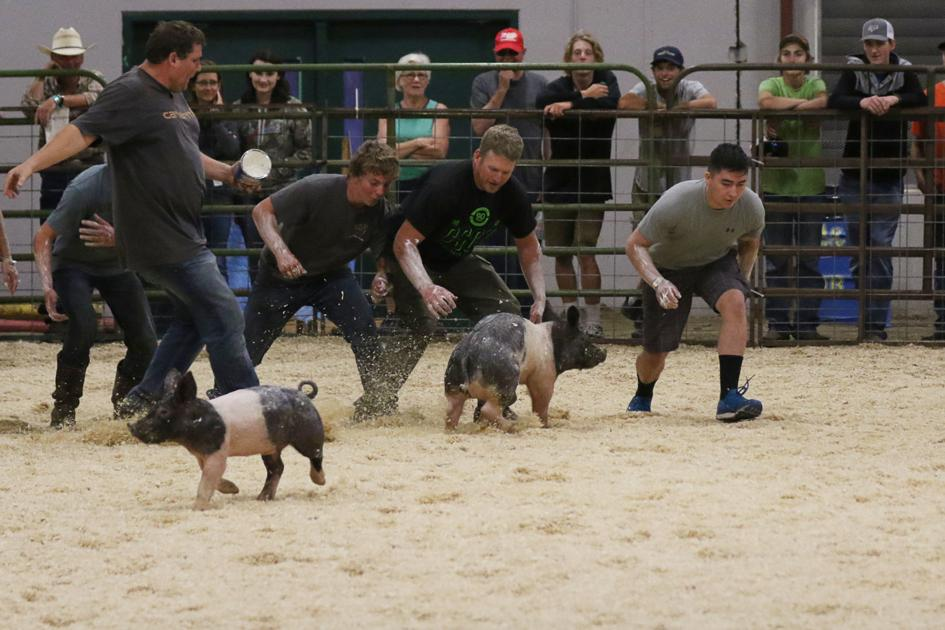 Greased Pig Contest Sends Contestants Tumbling News