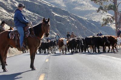Eaton Cattle Drive